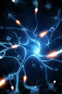 Нервные клетки и импульсы
