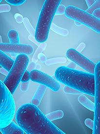Другие бактерии