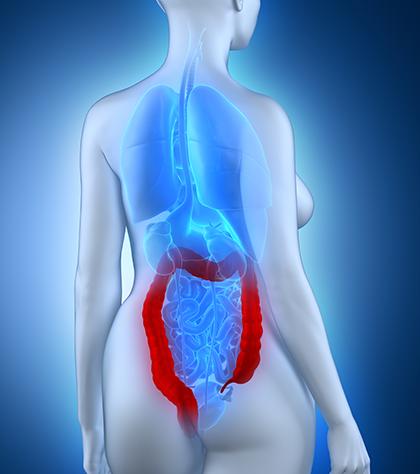 Изображение строения толстого и тонкого кишечника
