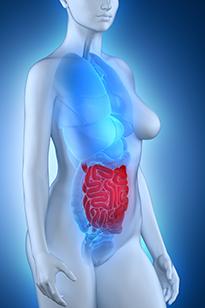 Иллюстрация строения кишечника