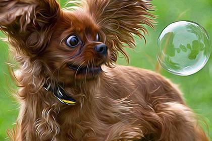 Собаки тоже могут икать: как помочь своему любимцу и быстро снять симптомы недомогания