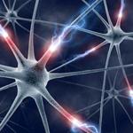 Как мозговые импульсы создают модели поведения