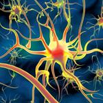 Мозг и воспоминания
