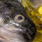 Благодаря рыбьему жиру можно укрепить зрение