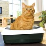Влияние паразита из кошачьего туалета на мозг